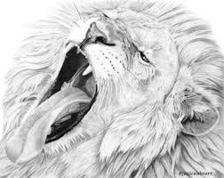 graphite pencil drawing of a lion yawning graphite pencil