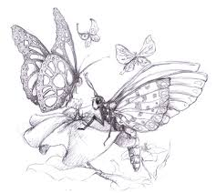beautiful butterfly sketches