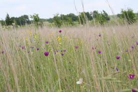 north texas native plants native prairies association of texas