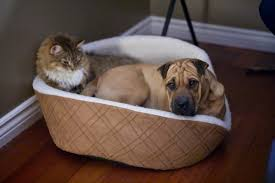 Cats In Dog Beds Funny Video Of Cats Stealing Dog Beds Travels And Living