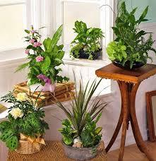 indoor plant arrangements indoor house plant arrangements the easiest indoor plants to grow