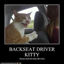 Dog Driving Meme - best dog driving meme back seat driver funny quotes quotesgram 80