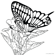coloring pictures of small butterflies butterfly coloring pages printable coloring pages collection small