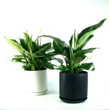 indoor plants that need no light plants that need no light fooru me