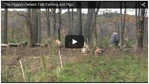 how to setup a pig farming business how to raise livestock
