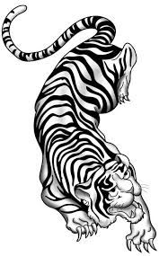 stunning like black and white crawling tiger