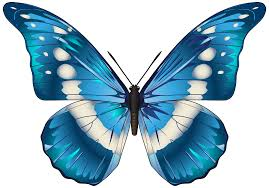 butterfly blue png clip art image gallery yopriceville high