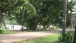 suntisook resort tha kaow beach koh yao noi phang nga youtube