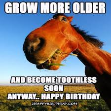 happy birthday horse meme funny songs 2happybirthday memeshappy