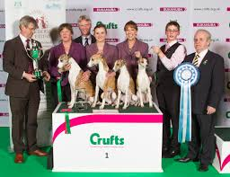 affenpinscher crufts 2016 breeders u0027 competition makes welcome return to crufts