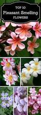 Very Fragrant Plants - top 10 of the most fragrant flowers in the world gardens flower