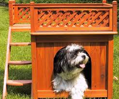 Bunk Bed For Dogs Bunk Bed