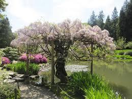 Botanical Gardens Seattle U S Botanical Gardens Japanese Garden Seattle Washingto Flickr