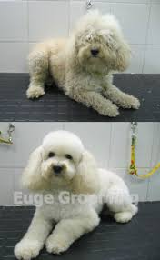 Dog Grooming Styles Haircuts 520 Best Grooming Images On Pinterest Puppies Animals And Dog