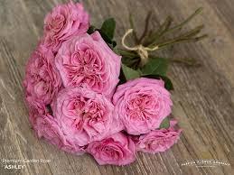 assortment parfum flower company