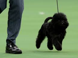 affenpinscher india feb 13 photo brief ash wednesday with the pope mars rover self