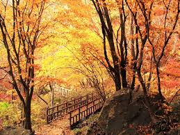 autumn in korea korea things korean autumn in