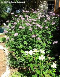 10 best sun garden round rock tx images on pinterest sun