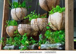vegetable window garden vegetable planting pot stock photo