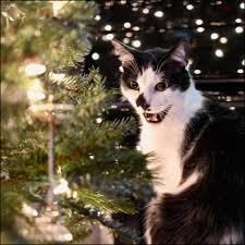 o tree o tree your ornaments are history
