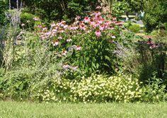 tall pink perennial flowers perennial flower wallpapers