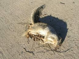 Dead Squirrel Meme - science l ennemi