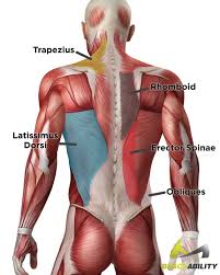 torn pulled strained back muscles what you didn t