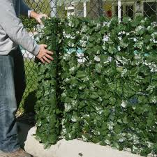 popular ivy privacy fence u2014 fence ideas fence ideas