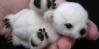 Hairless Bear Meme - cute polar bear cub or is it smprsn