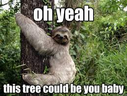 Funny Sloths Memes - 28 most funny tree meme photos and images of all the time