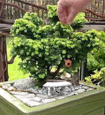why do conifers make great mini garden trees the mini garden