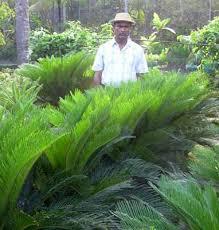 landscape plants buy in kolkata