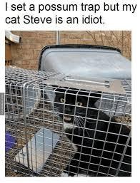 Cat Trap Meme - l set a possum trap but my cat steve is an idiot trap meme on