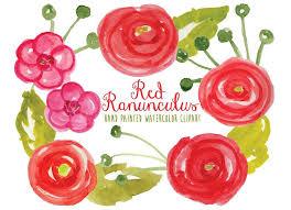 Ranunculus Watercolor Ranunculus Illustrations Creative Market