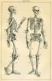 49 best skeleton illustrations images on pinterest skeletons