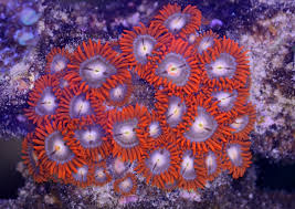 led reef aquarium lighting led and lep reef tank lighting gets thumbs up for coral growth