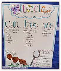 whats the bug deal the first grade parade science pinterest