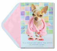chihuahua in robe slippers birthday cards papyrus