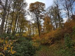 Bad Berleburg Reha Herbstimpressionen Aus Dem Schlosspark In Bad Berleburg Kirsten