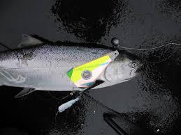 rigging success shortbus flashers fish flasher salmon trolling