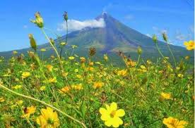 volcano flowers mayon volcano bane or boon of wow philippines