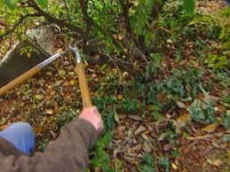 how to make a rock garden how tos diy