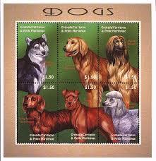 afghan hound mandarin grs0103sh2dog6show jpg