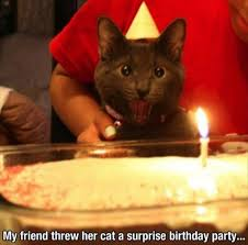 Funny Cat Birthday Meme - surprise the cake is for us lolcats lol cat memes