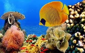 tropical fish wallpaper 63 images