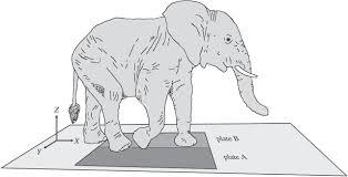 foot pressure in african elephants open science