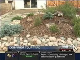 Backyard For Dogs Landscaping Ideas Build A Dog Friendly Backyard Fox 31 Youtube