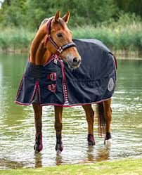 Outdoor Rugs For Horses Rugs Kramer Equestrian