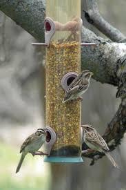 9 best bird watching images on pinterest beautiful birds