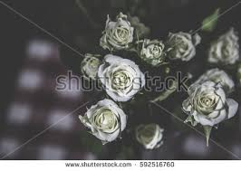 suns rays on small bouquet roses stock photo 592516760